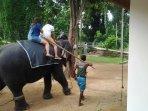 Elephant ride on Pinnawala