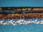 Beautiful Flamingos on salt lake close to the house