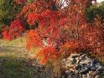 Autumn in Karst
