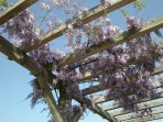 Sweet smelling wisteria covers the pergola every springtime.