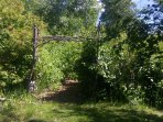 Entrance to the enchanted forest, a pathway through our wooded area.