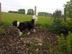 secure dog friendly garden