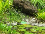 The garden has many ponds and each has fish which eat mosquito larvae and reduce them to a minimum