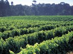 Within 15 mins of the best of Margaret River's wineries