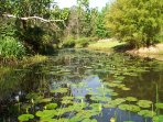 our blue waterlily lagoon