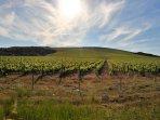 Driving from Supetar port to Bol, stunning vineyard that makes 'Bolski Plavac' and 'Jako' vino