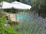 Tuscan lavender, sunshine, cool pool - bliss