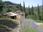 The lavender walk in beautiful Tuscan sunshine.