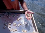 Located on Beals, the Downeast Institute gives daily tours of it shellfish and lobster hatcheries.