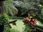 Vivid tropical plants in the garden