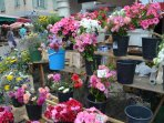 flowers at nearby market