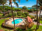 Palm Tree,Tree,Tropical,Yard,Pool