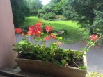 View out the window in the lounge room into our beautiful gardens