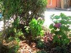 particolare giardino