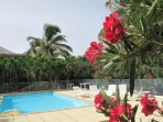flowers around the pool