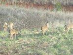 A herd of deer are often seen on the adjacent hillsides!