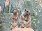 Curious Neighbors near camp.