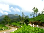 Road from Munnar town to Solitude
