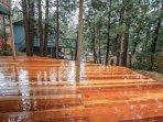 Deck,Porch,Hardwood,Forest,Vegetation