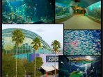 Tampa Aquarium is perfect for all ages.