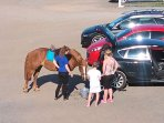 A pony came to have a drink in the car part at Time Flies at the Longhouse.