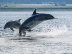 Dolphin watching from Chanonry Point