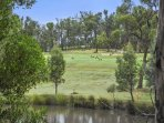 See the kangaroos on the golf course
