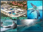 Here, you can find fun and educational presentations and playful dolphins.