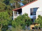 Das Haus ist mit Feigenbäumen und Olivengarten umgegeben. Hinter dem Haus ist Kieferwald.