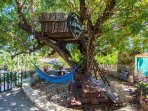 Carob tree sitting area