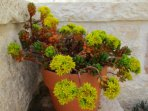 Outdoor - Succulent plants