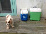 pets welcome at Tybee Queen with 113 pet fee. Ask if more than one.