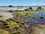 Tide pools host hermit crabs, larger crabs, baby lobsters, flounder, and other small marine life.