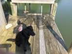 You'll have access to 3 crab pots to catch crabs off the dock (dog not included)...