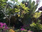 Many exotic plants in the garden