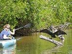 kayaking in Ding Darling National Wildlife Refuge