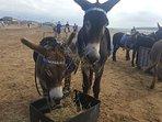 Take a ride on Weston's seaside donkeys (Summer only)
