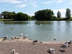 Feed the swans, ducks and birds at Apex Park in Burnham-on-Sea