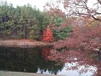 View of pond in the fall