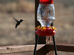 Hummingbird are our favorite next to the Roadrunners & Sandhill Cranes.