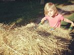 Les enfants participent au nourrissage des animaux pendant leur séjour.