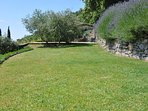 Lawn to walk on - Magical Tuscan Home in Cortona. Private house, pool and garden. Stunning!