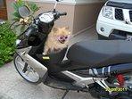 Bikers Moll!
