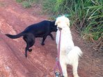 Stormie/ Naomi are good guard dogs but very friendly. when out put Stormie on a leash, Naomi is ok
