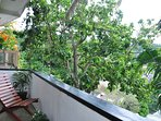 Garden View Room- balcony view