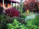 Red berberus & Smoke Bush in west garden