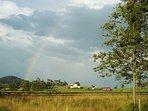 Swan lake farm and rainbow