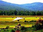 Swan lake farm on a sunny day