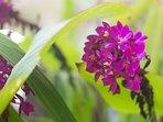 Garden Land Orchids
