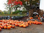 Pumpkins at Russel apple orchard in fall